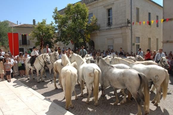 Manadiers à Saint Géniès des Mourgues - Montpellier